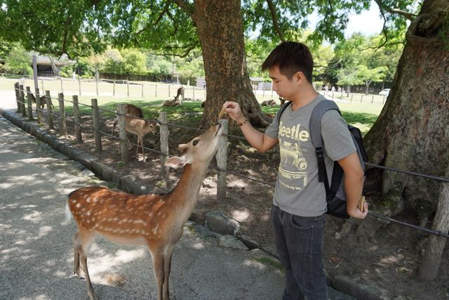 My friend feeding a deer in Nara Park