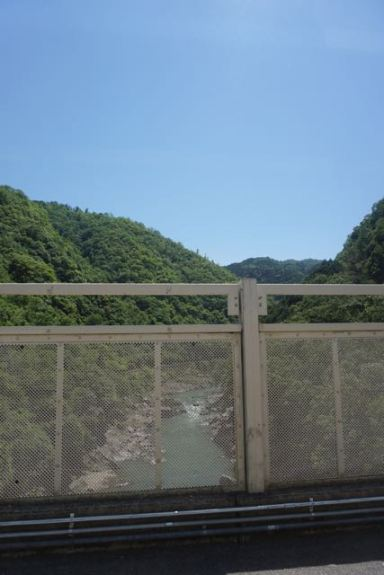 Wilderness in Arashiyama