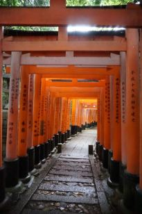 We got good shots of the torii gates