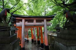 Some of the torii gates on Mt Inari