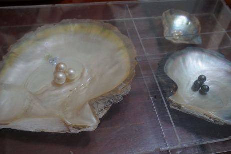 Pearl cultivated in Halong Pearl