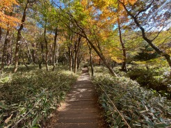 The start of Yeongsil Trail is an easy walk through the forest