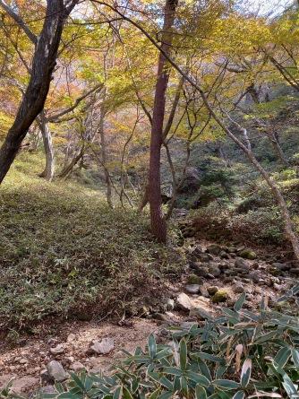 Pleasant walk through the forest