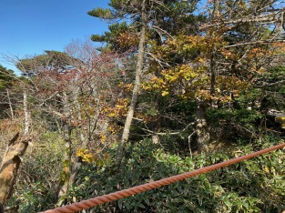 Yeongsil Trail flattens out from here