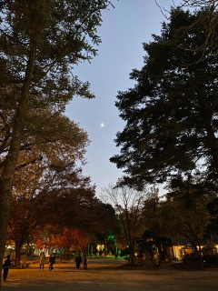 It is getting dark soon on Nami Island
