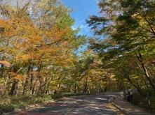 The autumn foliage along the road