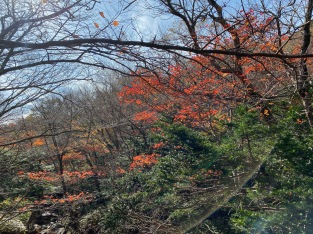 The red leaves on the trees in the forested part of Yeongsil Trail