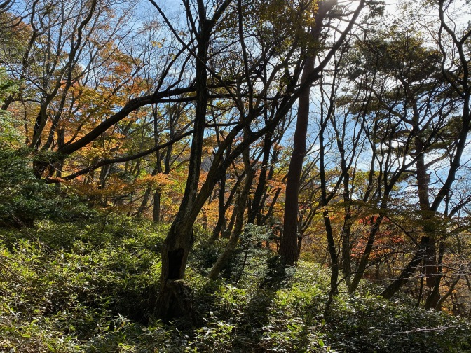 More autumn foliage in the forest
