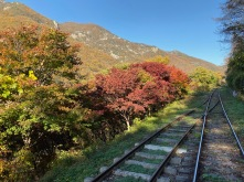 Red leaves on the trees along the tracks